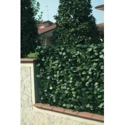 recinzione pvc con foglie lauro e rete ombreggiante h. 150 l.300 cm