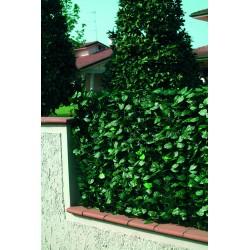 recinzione pvc con foglie lauro h. 100 l. 300