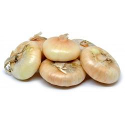 Cipolle borettane cal.1 kg.1