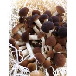 funghi chiodini gr.250