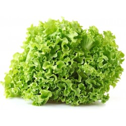 insalata gentile gr.500
