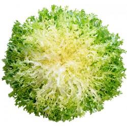 insalata riccia gr.800