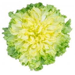 insalata scarola gr.800