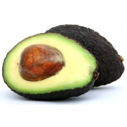 Avocado fresco Hass gr.250