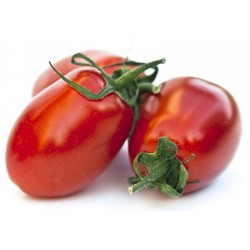 Pomodoro peretto rosso KG.1