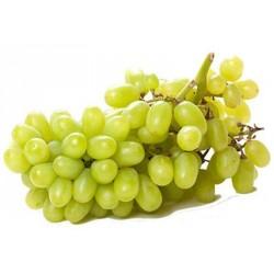 Uva bianca thompson Cile kg.1
