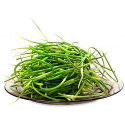 Talli di aglio italia kg. 1
