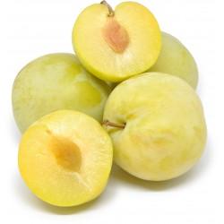 Prugne golden plum italia kg.1