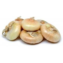 Cipolle borettane cal. 2 gr. 1000