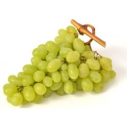 Uva bianca prime kg.1 sud africa